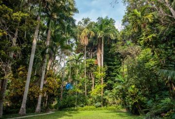 Foto del Jardín Botánico Guillermo Piñeres