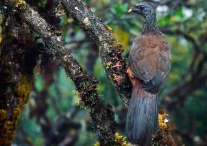 Foto: INSTITUTO ALEXANDER VON HUMBOLDT (COLOMBIA)
