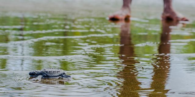 Investigando y Conservando Tortugas