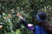 Con éxito finaliza expedición botánica de Boyacá Bio y Kew Gardens.Foto Colciencias