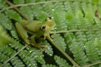 Foto: Felipe Villegas. El ecosistema predominante en la zona está compuesto por densas coberturas boscosas, que se conservan porque se encuentran en montañas con marcadas pendientes.