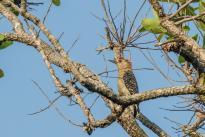Foto: Felipe Villegas. Biodiversidad en los ecosistemas asociados a la desembocadura del caño Terecay en el río Tomo, Puerto Carreño y Vichada