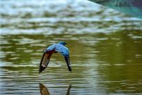 Colombia Bio le apuesta a conocer, valorar y aprovechar sosteniblemente la Biodiversidad del país