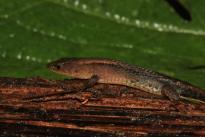 Foto: D. Cárdenas. Expedición Colombia - BIO, a la biodiversidad en la transición andino-amazónica del departamento del Caquetá. Un escenario de paz en el postconflicto