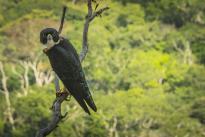 Foto:Jorge Arango. El Parque Nacional Natural de la Serranía de Chiribiquete se ubica en una zona de confluencia de diferentes formaciones biogeográficas, que lo convierten en un singular espacio para procesos evolutivos de especies de flora y fauna.
