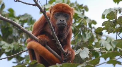 Foto: Fernando Trujillo.El Parque Nacional Natural de la Serranía de Chiribiquete se ubica en una zona de confluencia de diferentes formaciones biogeográficas, que lo convierten en un singular espacio para procesos evolutivos de especies de flora y fauna.