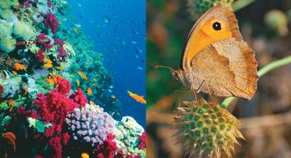 Colciencias prepara enviar una expedición para hacer un gran inventario en biodiversidad en zonas poco exploradas en el país