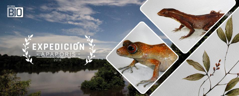 Inicia la expedición Apaporis con la entrega de tres nuevas especies para la ciencia.