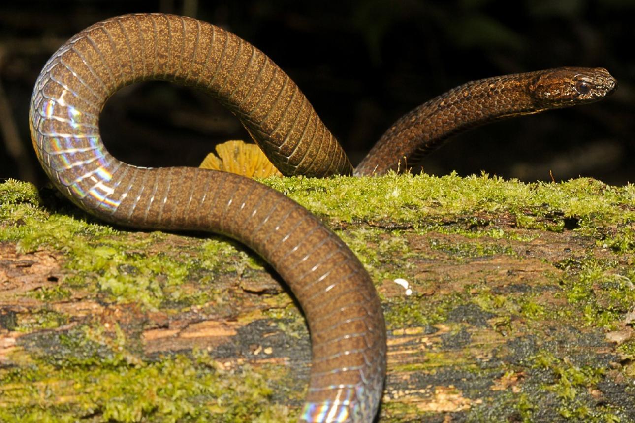 El Cerro Tacarcuna posee una enorme riqueza de recursos biológicos con elevados índices de endemismos inmersos en una imponente selva, que actúan como corredor biológico de la biota que converge de centro a sur América.