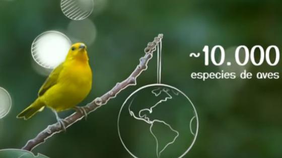 """Capatura de pantalla Documental """"El país de las aves""""."""